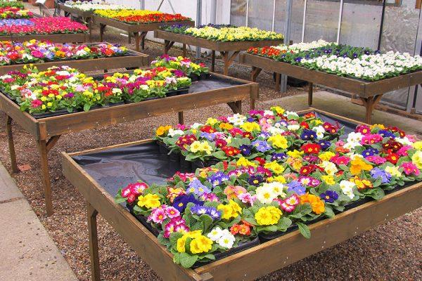 Garden-Centre-Southend-Tea-Room-Plants-Gardening-Tools-1