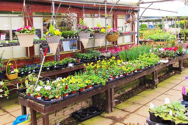 Garden-Centre-Southend-Tea-Room-Plants-Gardening-Tools-3