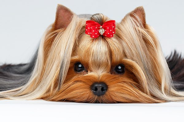 Naturally-Pawfect-Dog-Grooming-Spa-Dog-Grooming-Dog-Spa-Vegan-Day-Packages-Dog-Salon-Dog-Hydrotherapy-Ethical-And-Organic-Grooming-Southend-Essex-4