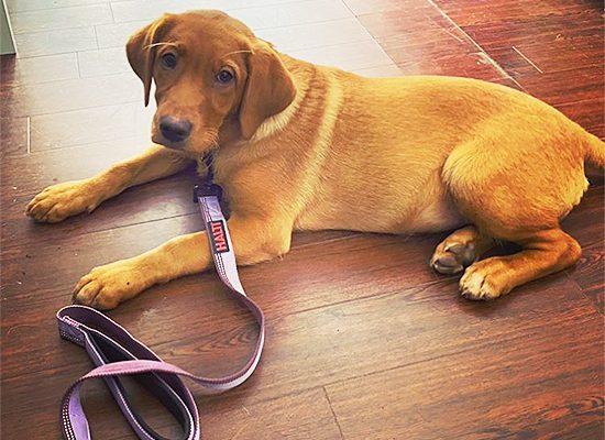 The-Doggie-Den-Boutique-Dog-Food-Dog-Accessories-Animal-Hygiene-Pet-Shop-Southend11